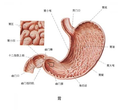 胃癌的早期症状 早期胃癌的症状
