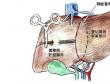 珂信肿瘤医院:肝癌常见问题